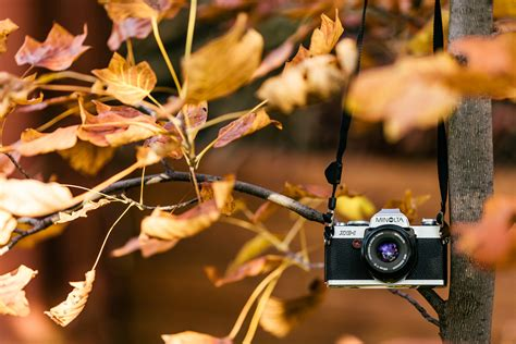 Free Images : tree, branch, technology, white, antique